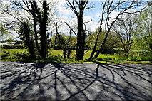 H4965 : Tree shadows, Raw by Kenneth  Allen