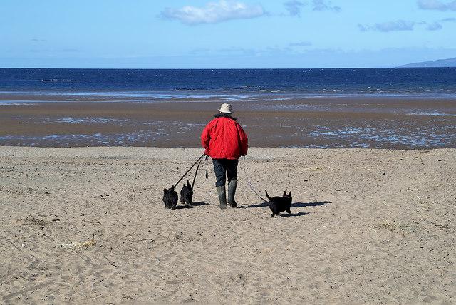 A dog walker on Troon South Sands