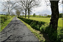 H4965 : Trees and shadows, Moylagh / Rarone by Kenneth  Allen