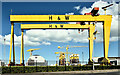 J3575 : Harland & Wolff cranes, Belfast (May 2019) by Albert Bridge