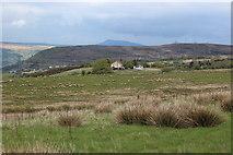 SO2111 : Rough grassland north of Blaenafon Road by M J Roscoe