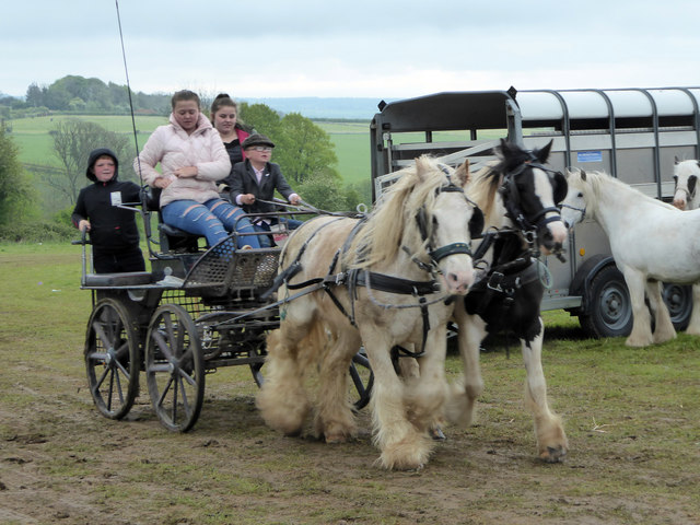 Horses and trap, Stow Fair, May 2019