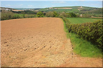 SS5726 : Ploughed field near Hildrew by Derek Harper