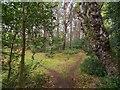 NH9358 : Lochloy Wood by valenta