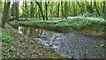 NZ5806 : Ingleby Beck, Church Plantation by Mick Garratt