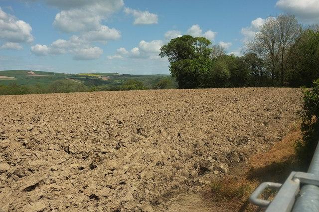 Field, Ensis