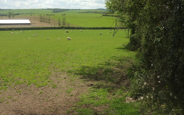 Sheep near Ensis