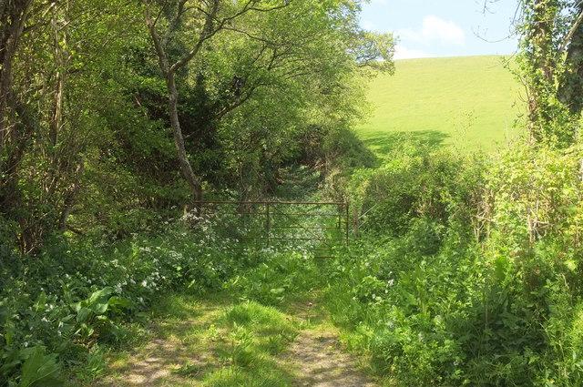 Field access track, Bustley Copse