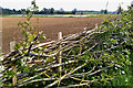 SE3268 : Layered hedge with recently developed Canal Reedbed in the distance by Mick Garratt