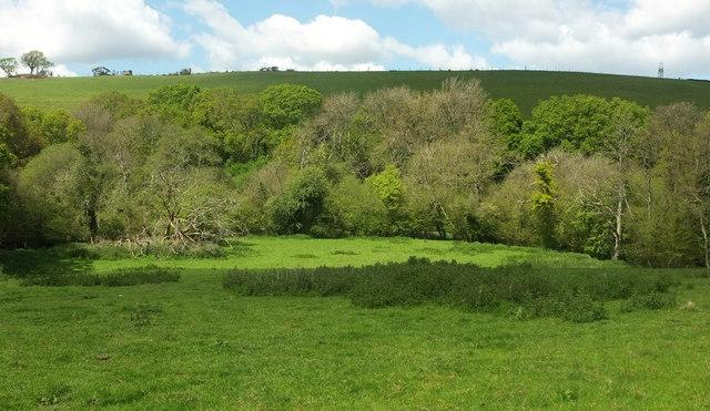 Trees along Newton Tracey Stream