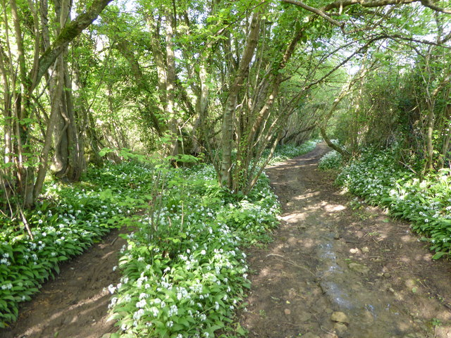 Green lane adjacent to Peascombe Nature Reserve