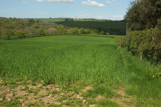 Cereal crop west of Hollick