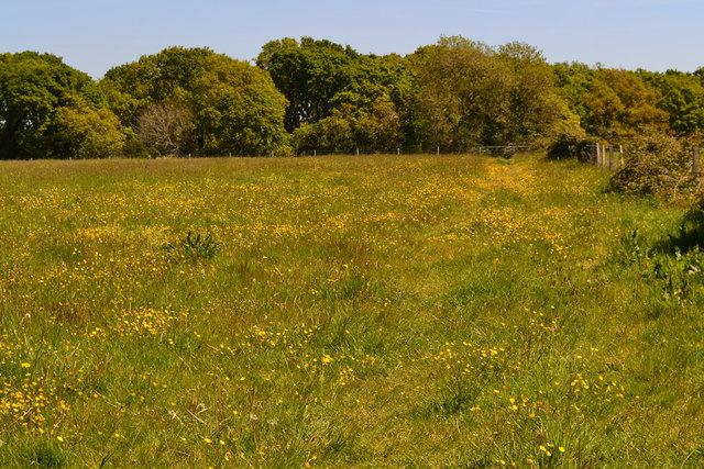 Footpath through a buttercup meadow towards Hordle