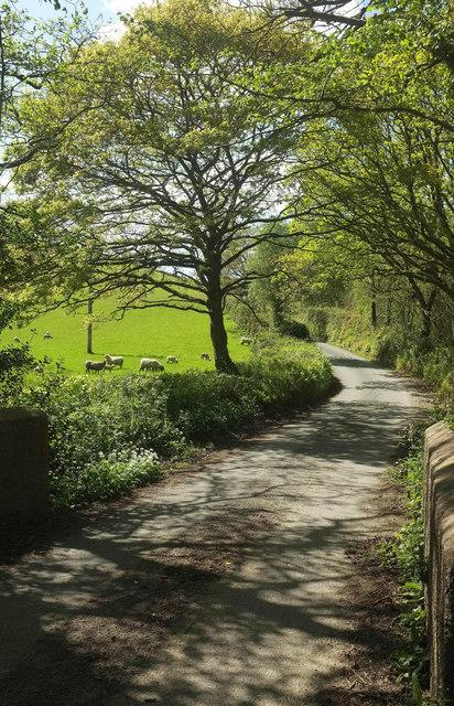 Lane from Portford Cross