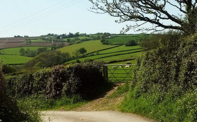 Sheep near Delley