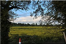 SP6359 : Field by Heyford Lane, Weedon Bec by David Howard