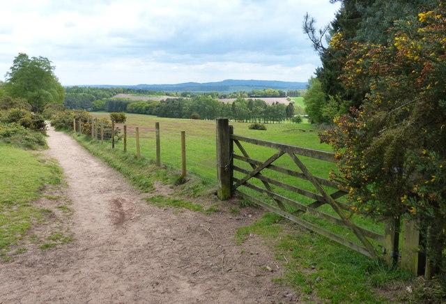 Path at Kinver Edge