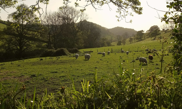 Sheep, Bydown