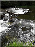 SK1273 : Chee Dale: a small weir across the Wye by Chris Downer