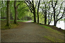 H5776 : Pathway round Loughmacrory Lough by Kenneth  Allen