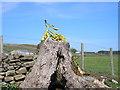 SE0951 : Tour de France celebration by John Illingworth