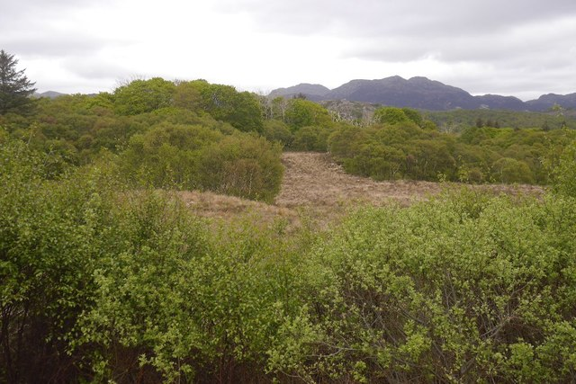 Birch wood near Loch Shieldaig