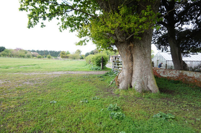 Path at Crow's Farm Burgh Castle