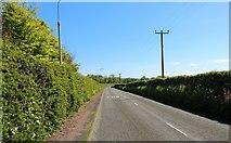 NT3295 : Main Street, West Wemyss by Bill Kasman
