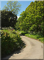 SX4053 : Church Lane, St John by Derek Harper