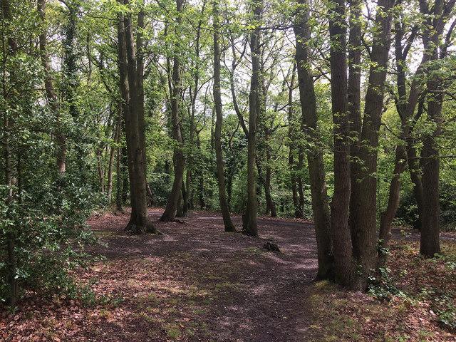 Biggin Wood (1)