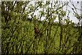 H5166 : Wild bird in the hedge, Dervaghroy by Kenneth  Allen