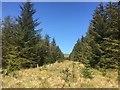 NN7308 : Ride, Bowsmuir Forest by Richard Webb