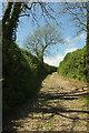 SX7248 : Green lane to Ham Butts by Derek Harper