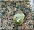 TG2408 : Land snail (Cepaea nemoralis) by Evelyn Simak