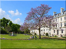 TR1457 : Dane John Gardens, Canterbury by Gary Rogers