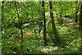 SX7349 : Woodland by the Avon by Derek Harper