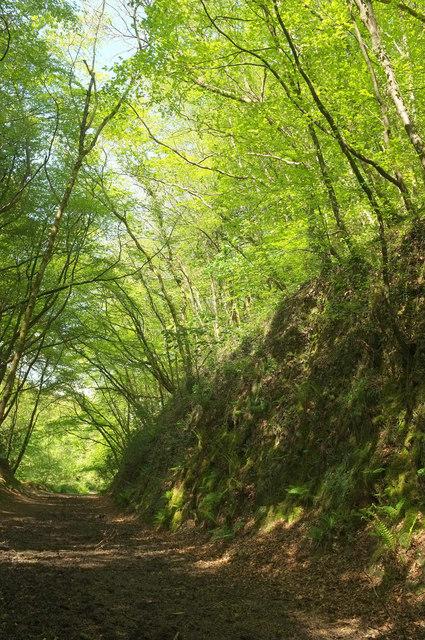 Railway cutting, Woodleigh Wood