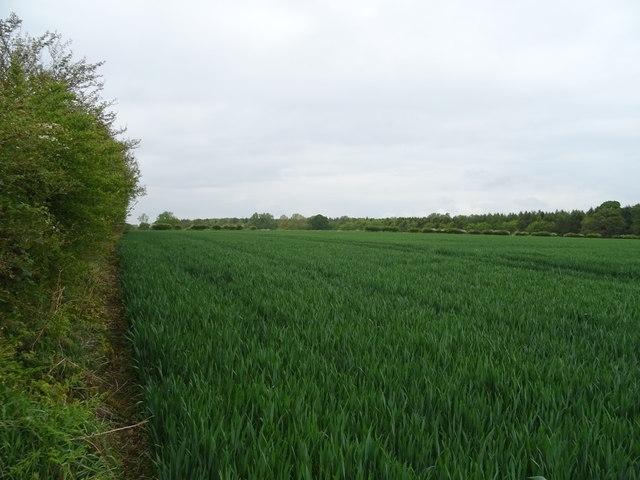 Crop field beside the A41