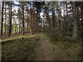 NH9258 : Lochloy Wood by valenta