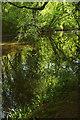 SX7349 : River Avon, Silveridge Wood by Derek Harper