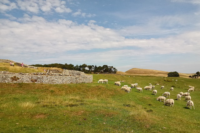 Sheep grazing outside the Roman fort