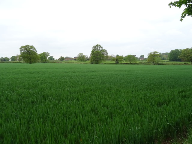 Crop field off The Avenue