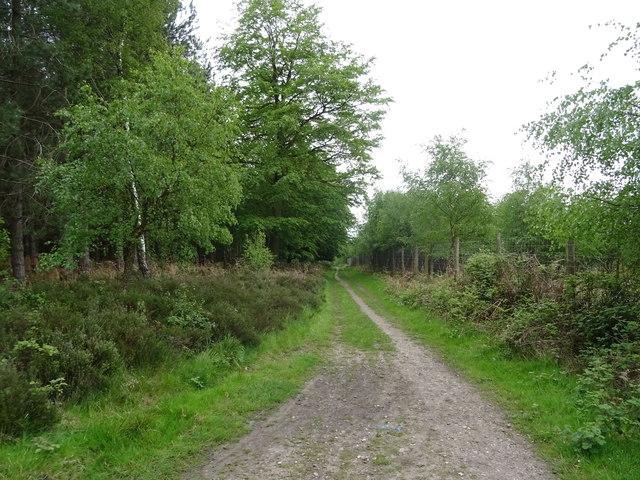 Woodland track, Cannock Chase