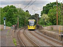 SD7807 : Tram Arriving by David Dixon
