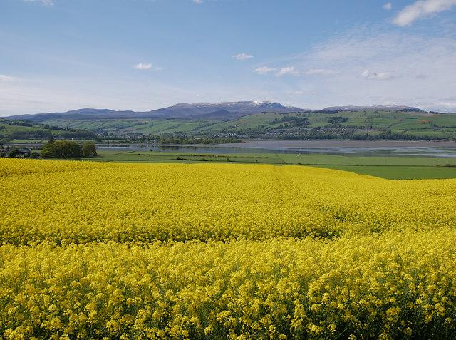 Yellow fields, by Ferintosh