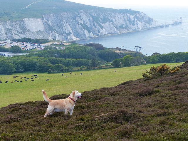 On Headon Warren, Isle of Wight
