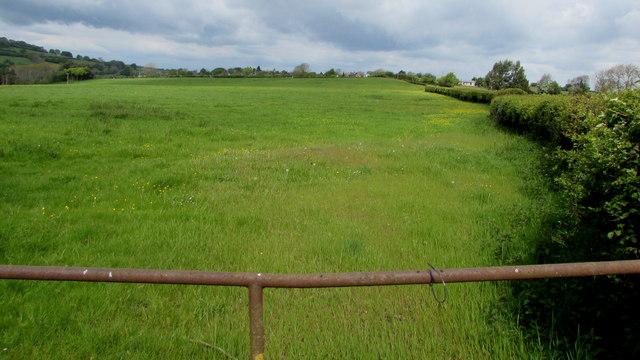 Upper Trewen field, Herefordshire