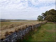 NY7868 : Hadrian's Wall near Broomlee Lough by Rudi Winter