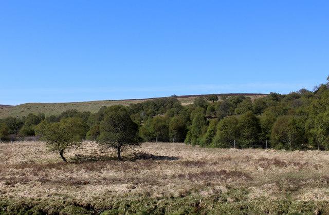 Strath of Kildonan near Suisgill Lodge
