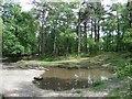 SU9229 : Pond on Black Down by Roger Cornfoot